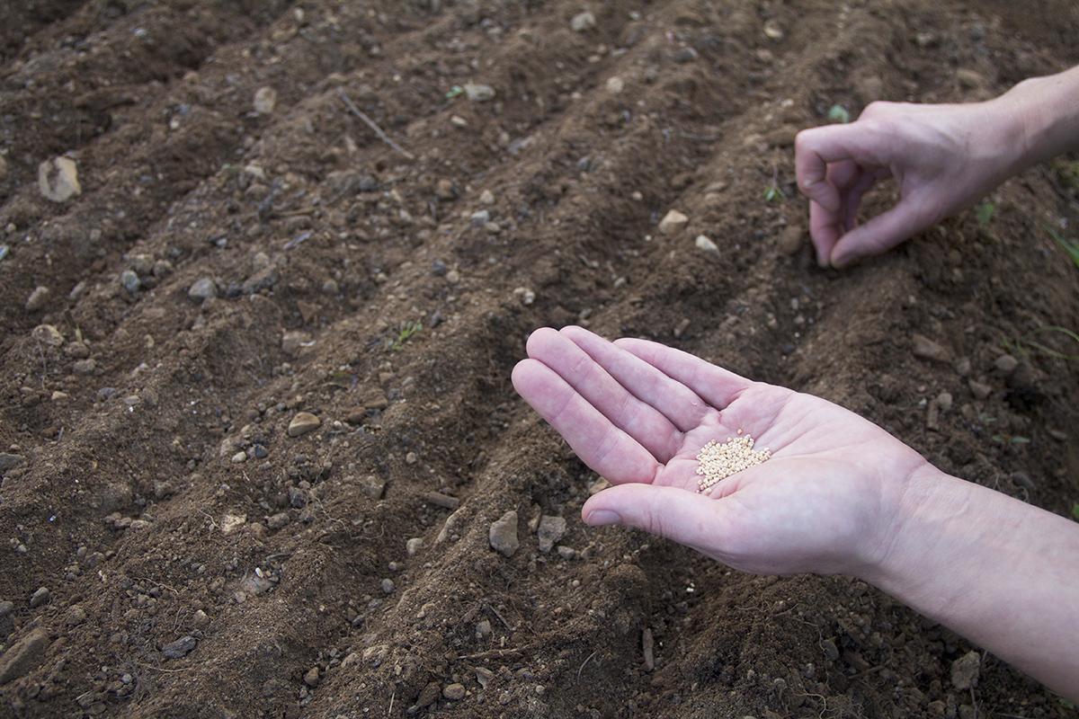 Seeds Please