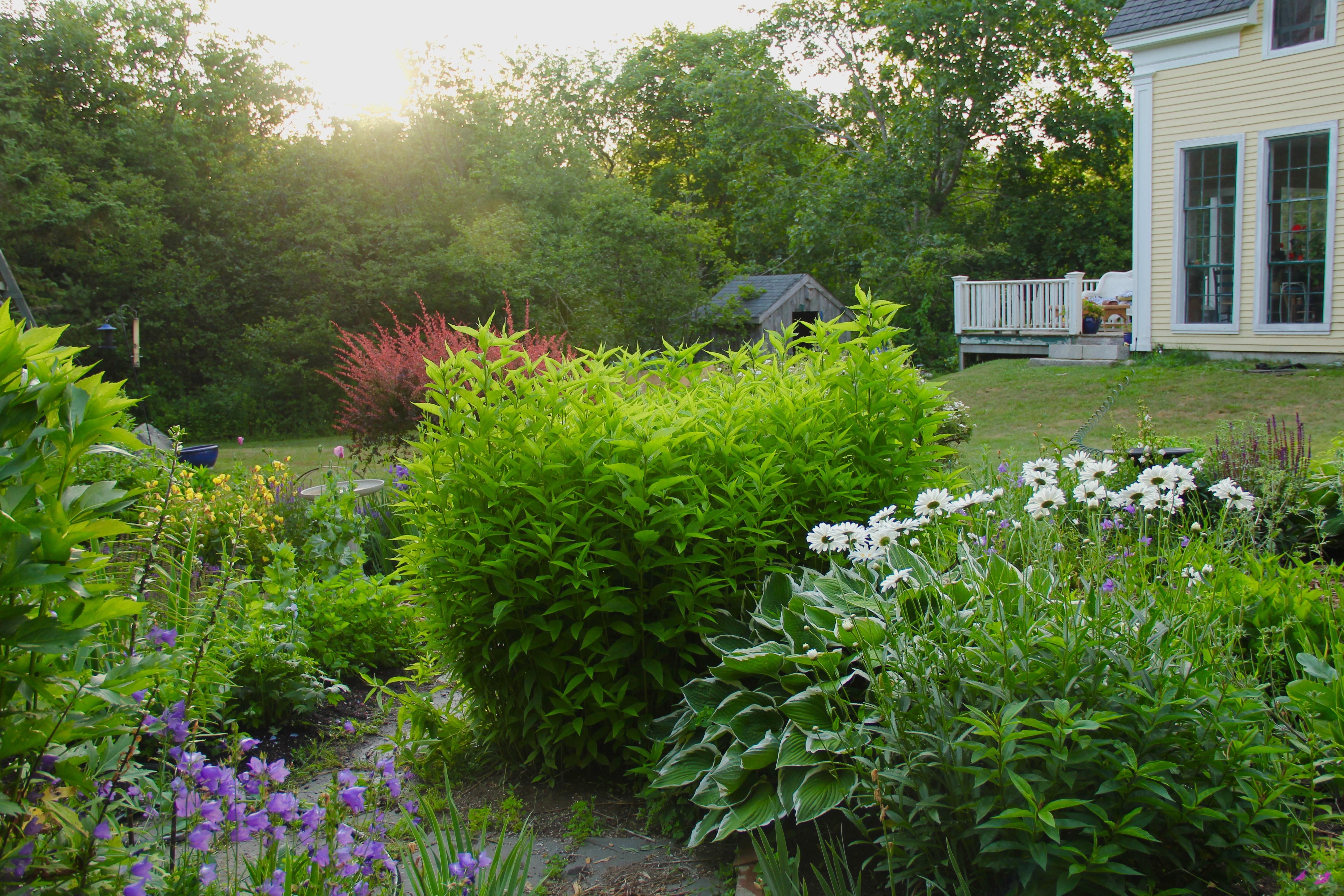 Garden Composition