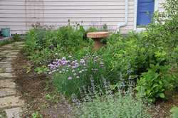 Catmint and Chive