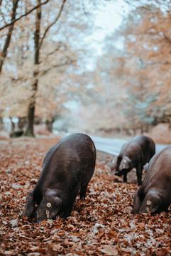 Local Produce Pork.jpg