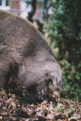Local Produce Pork (2).jpg