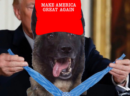 Dog Wearing MAGA Hat Who Killed Prominent Muslim Leader, Honored By Trump