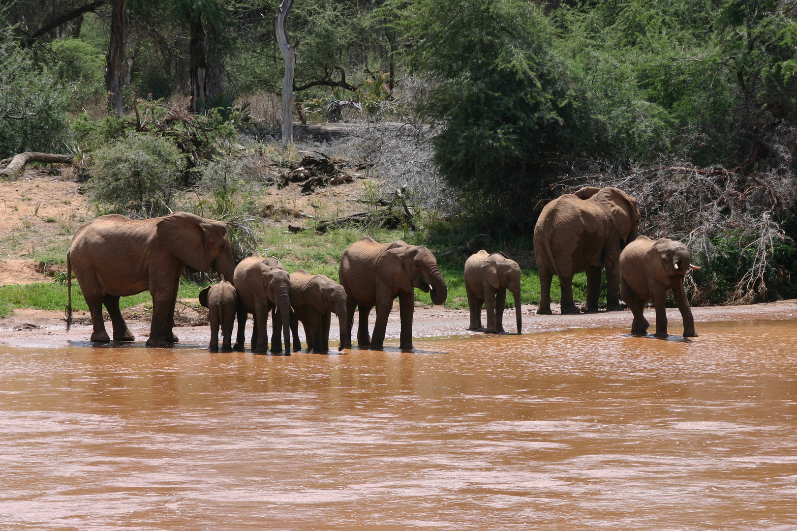 troupeau d'éléphants à Samburu
