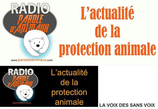 l'actualité de la protection animale