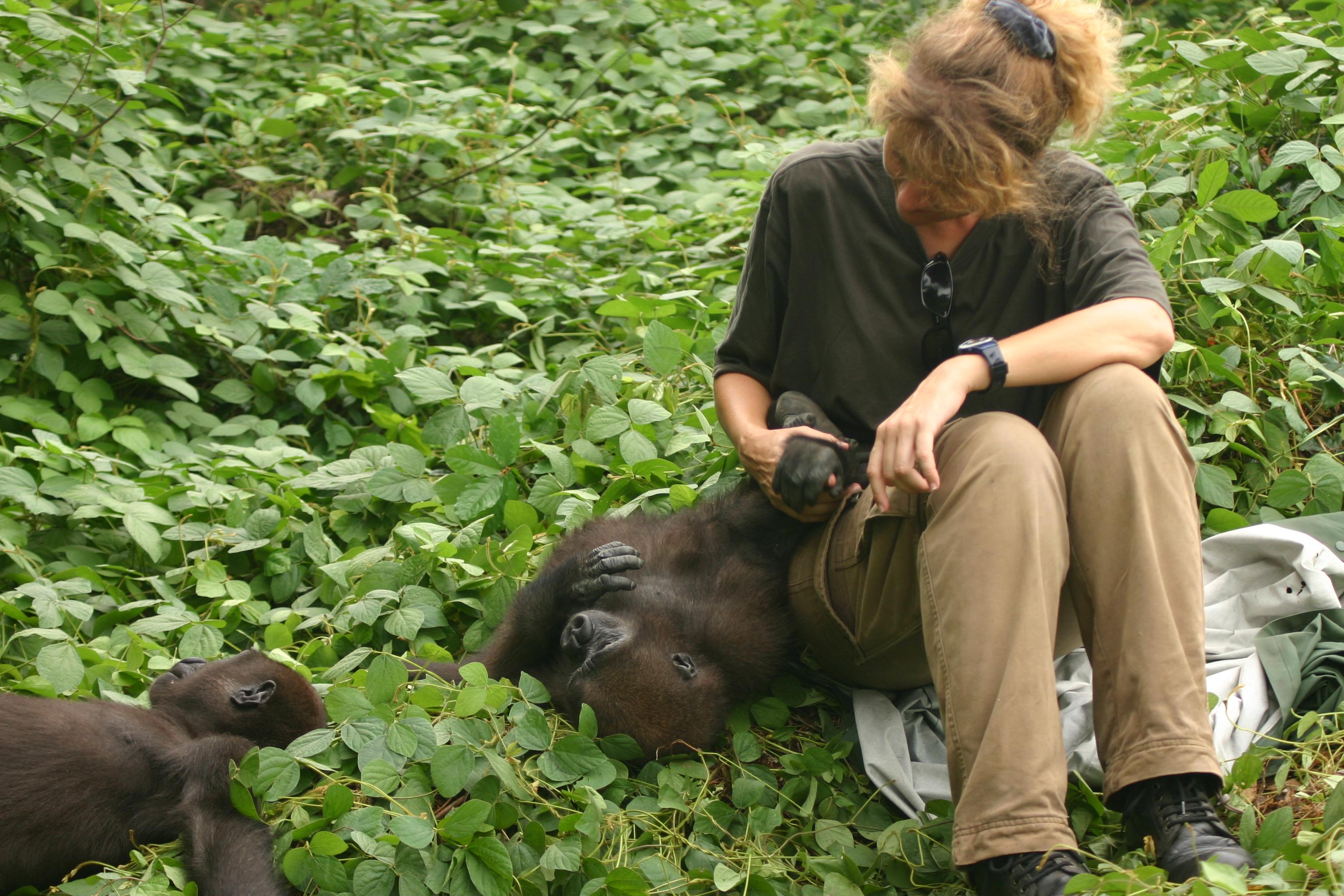 Astrid et gorilles dans la forêt
