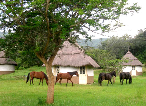 bandas et chevaux à Muringa Farm