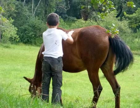 écovolontaire avec Justice, cheval