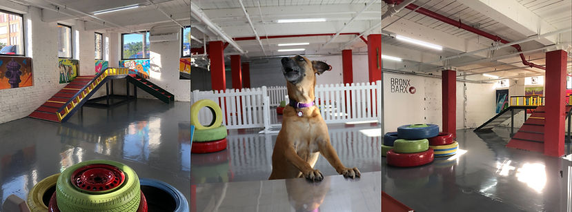Dog Daycare and Boarding in The Bronx