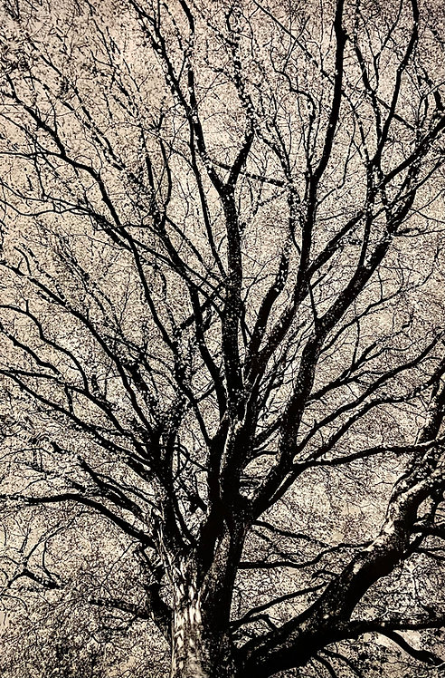 Per Heimly Tree of Life