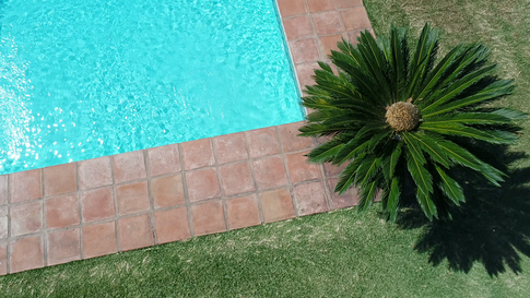 poolpalm.png