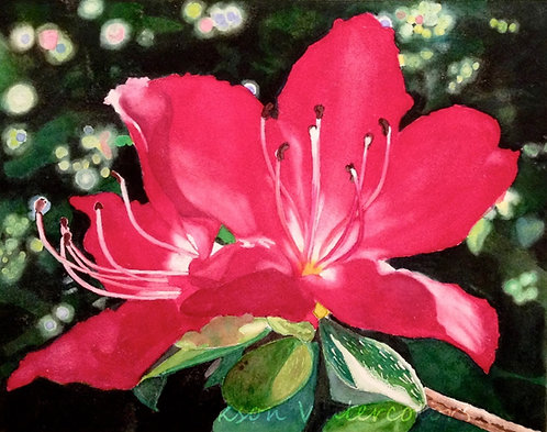"""Azalea"" Watercolor 8x10 Original"