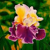 Jill Erickson Purple Velvet Iris Waterco