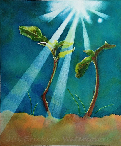 """""""Sprout in Sunlight"""" 7x5 Print"""