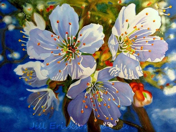 Jill Erickson Watercolors Sunlight.jpg