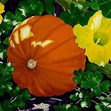 Jill Erickson Nancy's Pumpkin Watercolor