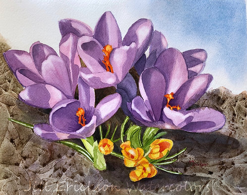 """Purple and Yellow Crocus"" 9x11 Original"