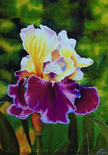 """Purple Velvet"" Iris Watercolor 12x10 Original"