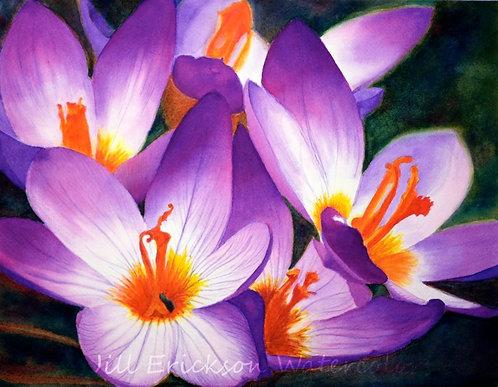 """Purple Crocus"" 11x14"