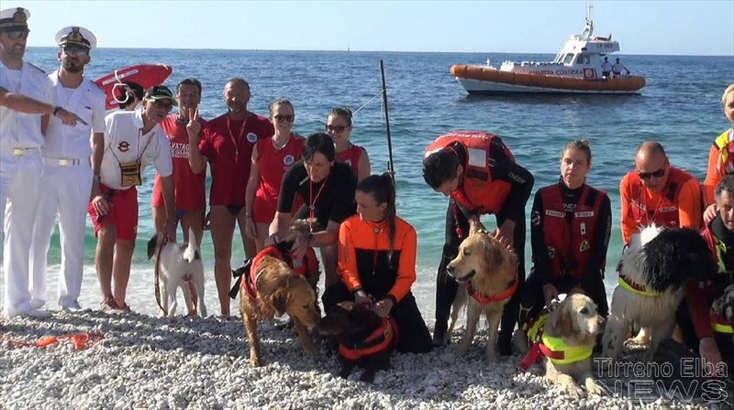 Dimostrazione dei cani da salvamento