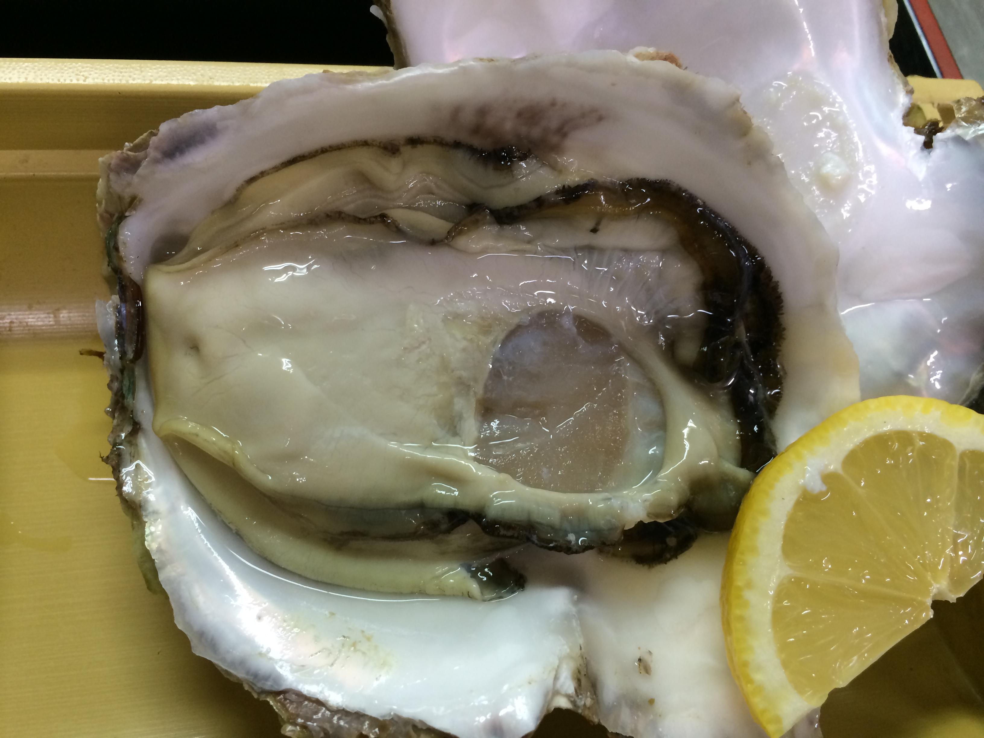 岩牡蠣(生)