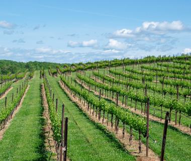 Viste Châteaux-route des vins