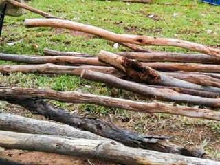 Bundle of Cubby Sticks