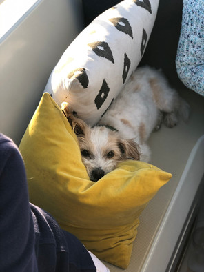 Sailing Dog Enjoying a Private Charter.j