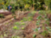 Agroforestry image 1.jpeg