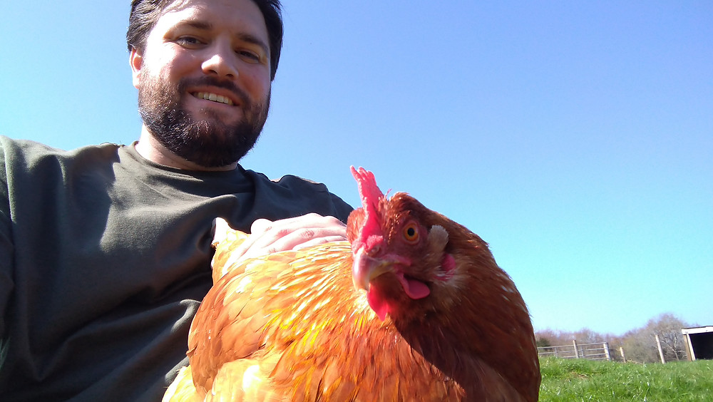 A rescued egg-laying hen stares into the camera while being stroked