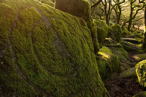 The Druids of Wistman's Wood