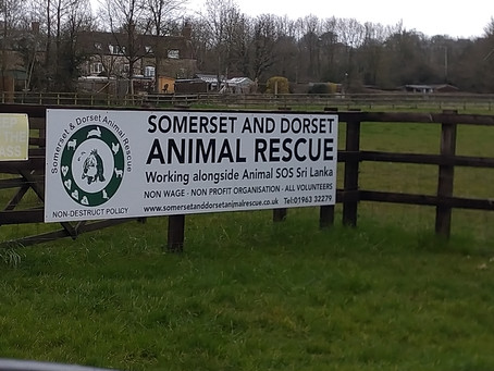 Somerset & Dorset Animal Rescue