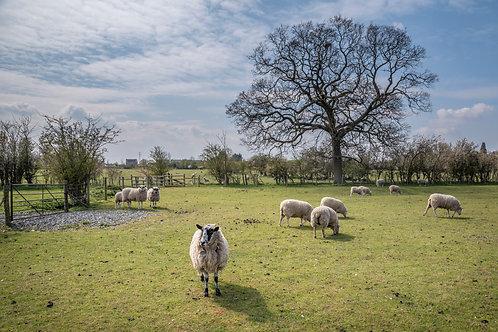 Peaceful Flock