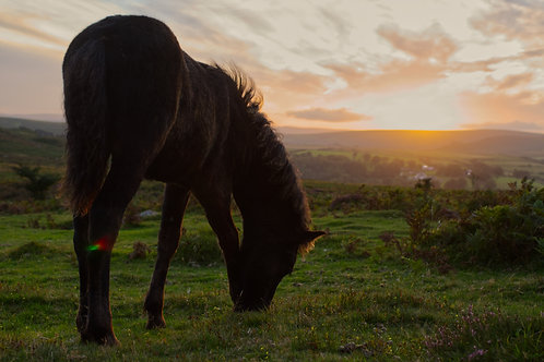 Pony Sunset