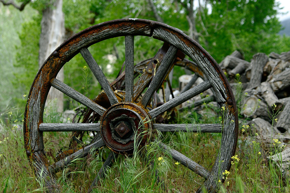 This is a picture of a wooden wheel in the grass next to a forest. On the right hand side is a stack of chopped wood.