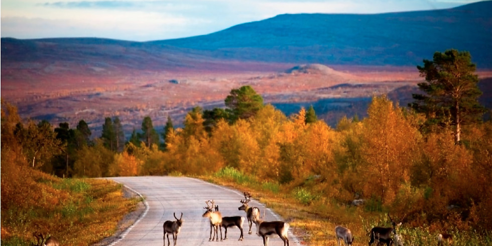 ----- Lapland Summer Course -----  a Journey to Neutral