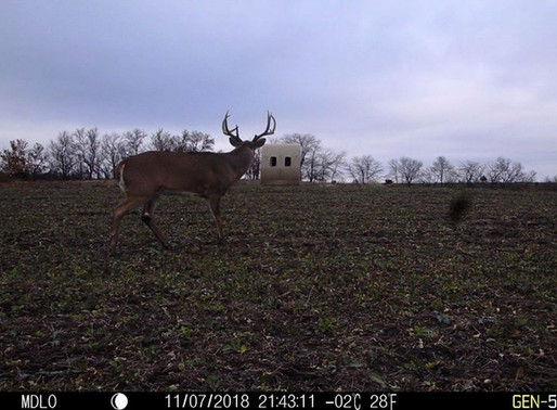 FOOD PLOTTING FOR MATURE BUCKS IN SOUTHERN IOWA