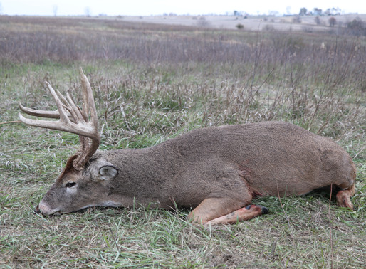 Side-by-Side Comparison: Leasing vs. Outfitted Hunts