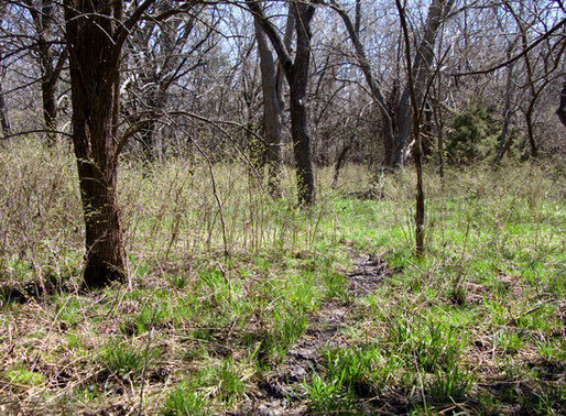 OPERATION UPDATE: MDL in Kansas