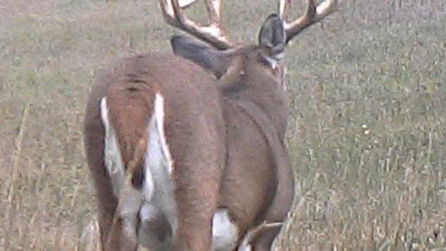 Iowa Whitetail Deer Hunts _ MDL OUTFITTE