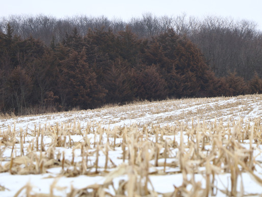"""""""Managed Farm"""" - Arguably the Most Fraudulent Phrase in the Free-Range Whitetail Outfitting Industry"""