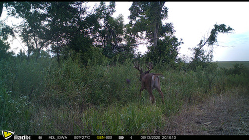 MDL Outfitters - Southern Iowa Whitetail Deer Hunts
