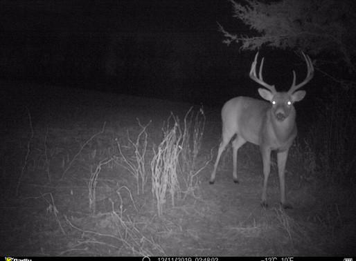 2020 Iowa Archery Season Outlook