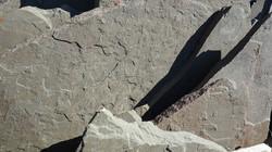 Variegated Bluestone Flagstone 11