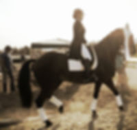 Dressage Training in Beaverton and Dressage Lessons in Beaverton