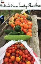 Bulverde Community Garden3.jpg