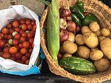 Bulverde Community Garden harvest.jpg