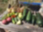 Garden-Provision Harvest.jpg
