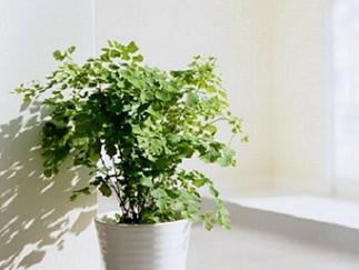 植物改善風水氣場