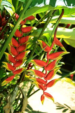 A flora local e suas cores vibrantes