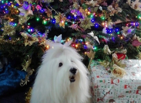 A Christmas photo from Cotonxtreme Zeus